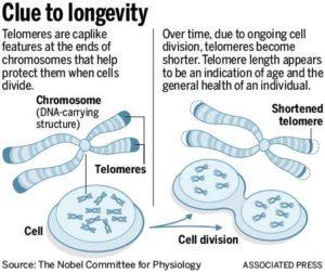 telomere-san-diego